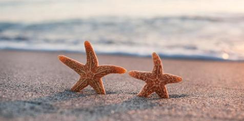 starfish-couple.jpg